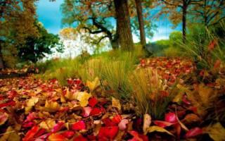 Как сделать экибану из листьев