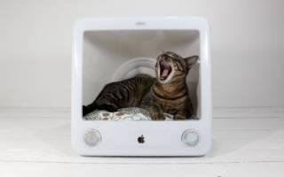 Как сделать из картона домик для кота